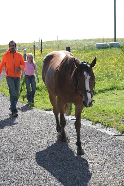 Bodenarbeit mit dem Pferd im Allgäu