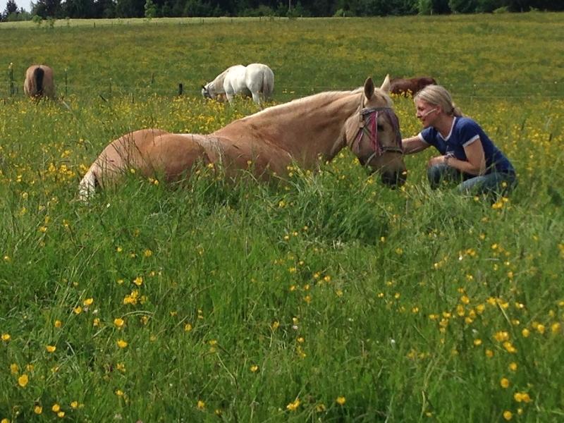 Vertrauen zum Pferd