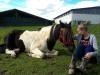Fairer Umgang mit dem Partner Pferd